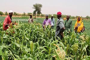 Emploi 3N Niger