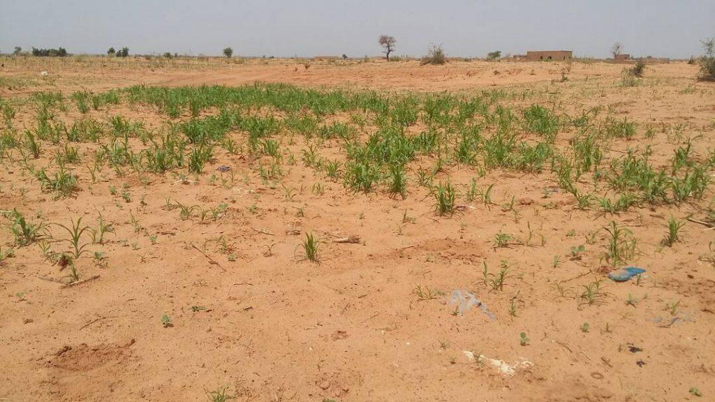 Zones cultivables à Niamey