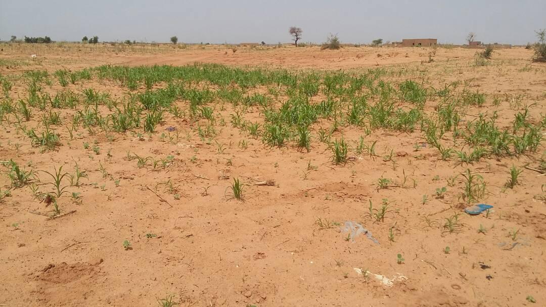 Niamey: les zones cultivables menacées par l'Urbanisation