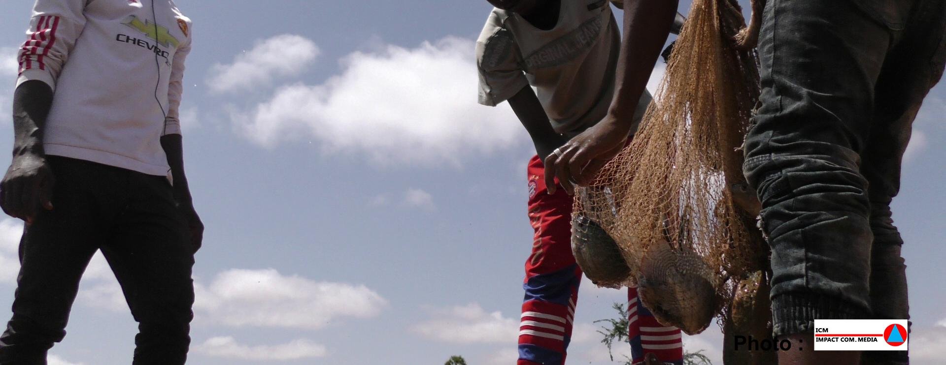 Vers l'adoption d'un Fonds d'investissement  pour la sécurité alimentaire et nutritionnelle (FISAN)