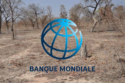 Banque Mondiale : Plus de 5 milliards de dollars d'investissement au cours des cinq prochaines années dans les zones arides en Afrique