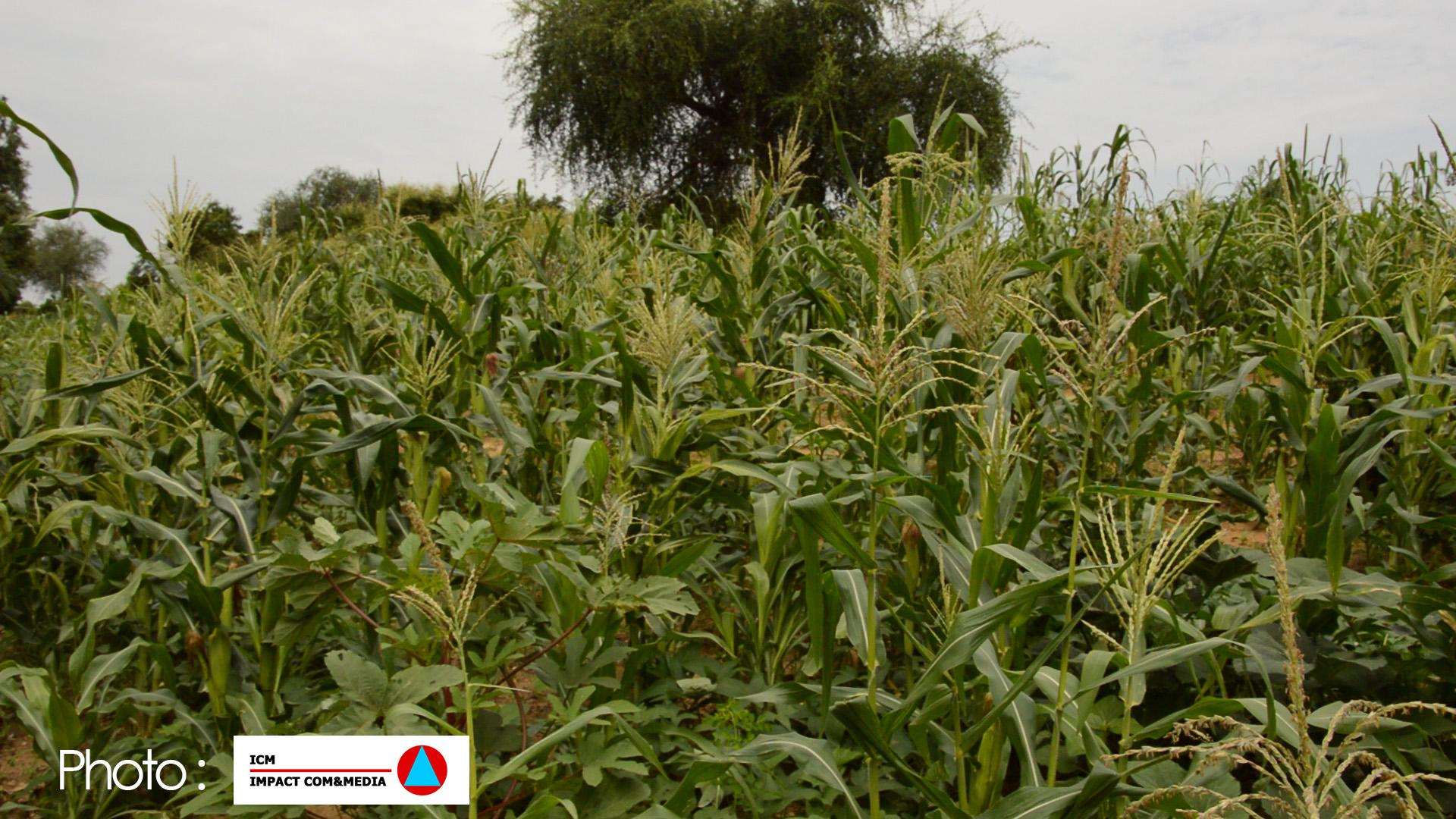 Niger: Lenteur dans le développement du secteur agricole