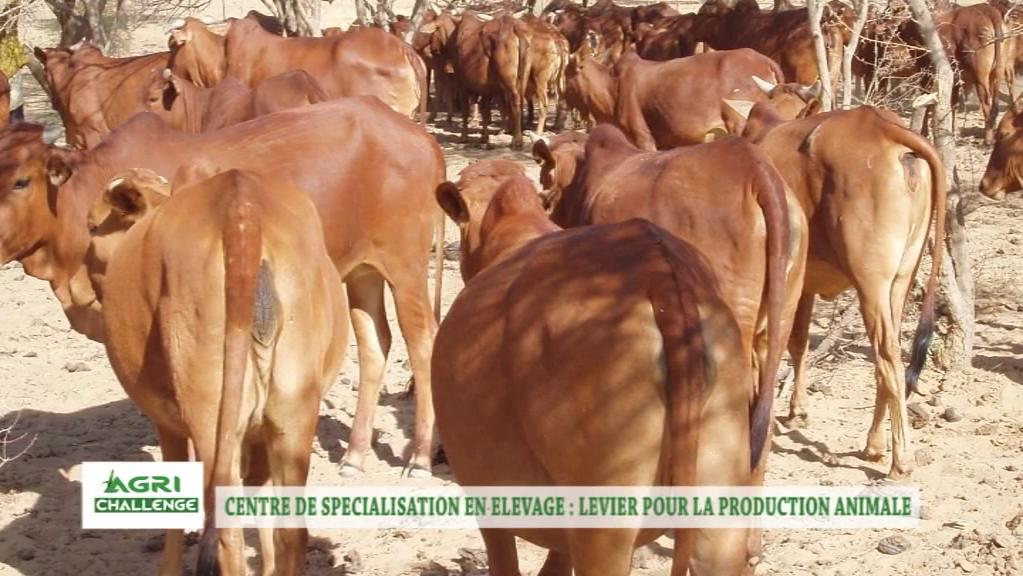 CNS-EL: Pilier du Développement pastoral au Niger